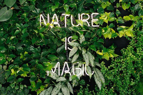 nature_neons